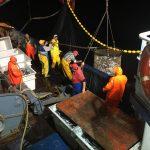 A pesca di sugarelli