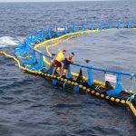 Linkiesta: a proposito di tonno rosso